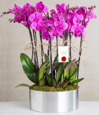 11 dallı mor orkide metal vazoda  Şanlıurfa hediye sevgilime hediye çiçek