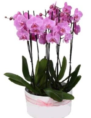 Beyaz seramik içerisinde 7 dallı mor orkide  Şanlıurfa çiçek mağazası , çiçekçi adresleri