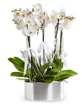 Beş dallı metal saksıda beyaz orkide  Şanlıurfa çiçek online çiçek siparişi