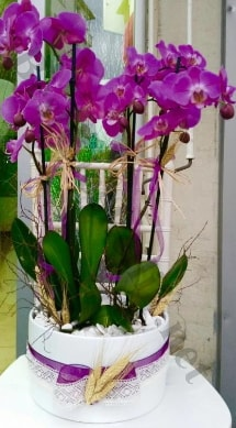 Seramik vazoda 4 dallı mor lila orkide  Şanlıurfa çiçek satışı