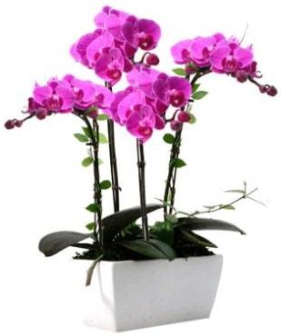 Seramik vazo içerisinde 4 dallı mor orkide  Şanlıurfa kaliteli taze ve ucuz çiçekler