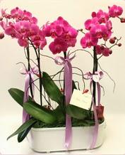Beyaz seramik içerisinde 4 dallı orkide  Şanlıurfa yurtiçi ve yurtdışı çiçek siparişi
