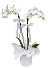 2 dallı beyaz orkide  Şanlıurfa cicek , cicekci