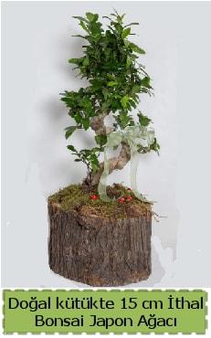 Doğal kütükte İthal bonsai japon ağacı  Şanlıurfa çiçek servisi , çiçekçi adresleri