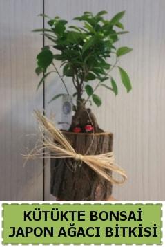 Kütük içerisinde doğal bonsai ağacı  Şanlıurfa çiçek mağazası , çiçekçi adresleri