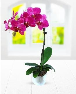 Tek dallı mor orkide  Şanlıurfa kaliteli taze ve ucuz çiçekler