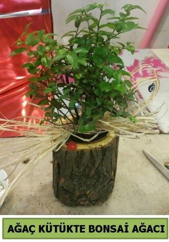 Doğal ağaç kütük içerisinde bonsai ağacı  Şanlıurfa hediye sevgilime hediye çiçek