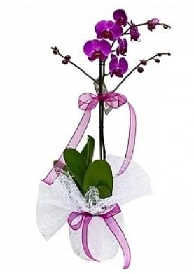Tekli Mor Orkide  Şanlıurfa çiçek online çiçek siparişi