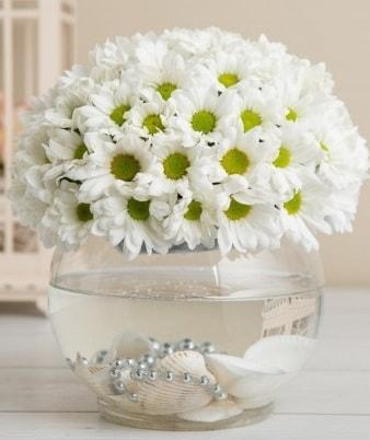 Fanusta beyaz Papatya  Şanlıurfa kaliteli taze ve ucuz çiçekler