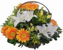 Şanlıurfa uluslararası çiçek gönderme  sepet modeli Gerbera kazablanka sepet